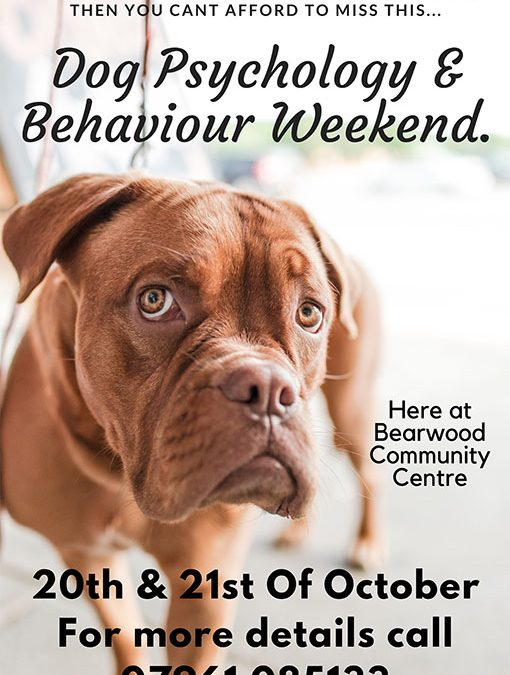 Dog Psychology and Behaviour Weekend